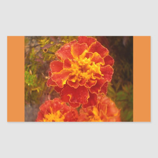 Orange Marigold Fall Morning Dew Sticker
