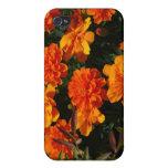 Orange Marigold Flowers iPhone 4 Case