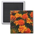 Orange Marigold Flowers  Magnet