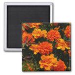 Orange Marigold Flowers  Magnet Refrigerator Magnets