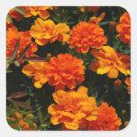 Orange Marigold Flowers  Stickers
