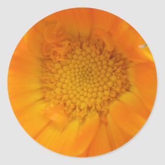 Orange Marigold Macro Stickers