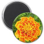 Orange Marigold Magnet Refrigerator Magnets