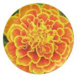 Orange Marigold  Plate