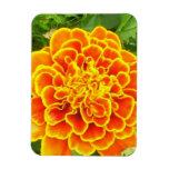 Orange Marigold  Premium Magnet Rectangular Magnets