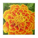 Orange Marigold  Tiles and Trivets