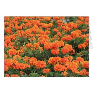 Orange Marigolds Card