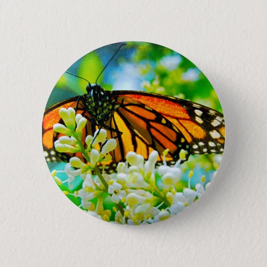 Orange monarch butterfly close-up photo button