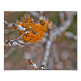 Orange Moss Print Photo Print