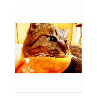 Orange muffler Chad Post Cards