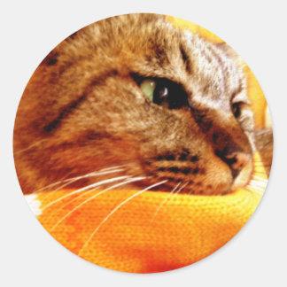 Orange muffler Chad