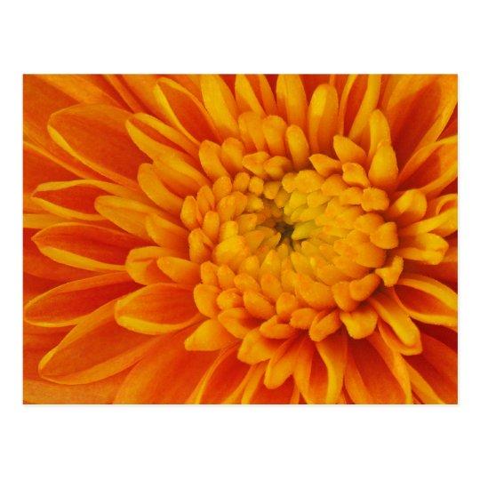 Orange Mum Floral Postcard