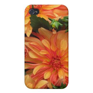 Orange Mums Speck Case iPhone 4/4S Cover