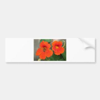 Orange Nasturtium flowers in bloom Bumper Sticker