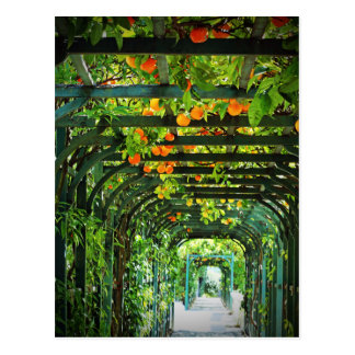 Orange Oranges and Yellow Lemons on Green Trellis Postcard