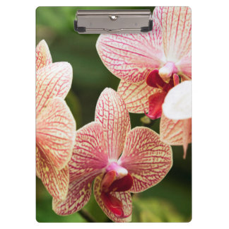 Orange Orchid Hybrid, South Africa Clipboard