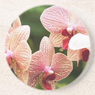 Orange Orchid Hybrid, South Africa Coaster