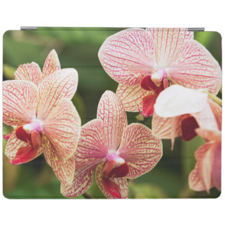 Orange Orchid Hybrid, South Africa iPad Cover