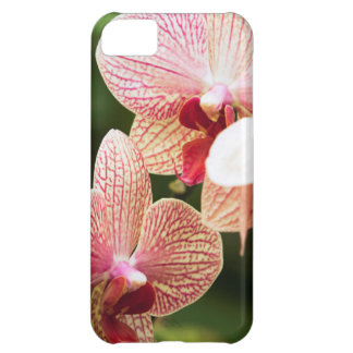 Orange Orchid Hybrid, South Africa iPhone 5C Case