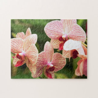 Orange Orchid Hybrid, South Africa Jigsaw Puzzle