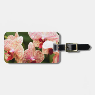 Orange Orchid Hybrid, South Africa Luggage Tag