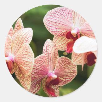Orange Orchid Hybrid, South Africa Round Sticker