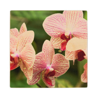 Orange Orchid Hybrid, South Africa Wood Coaster