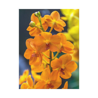 Orange orchids canvas print