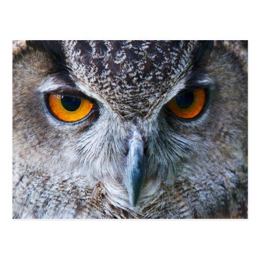 Orange Owl Eyes photography Post Cards