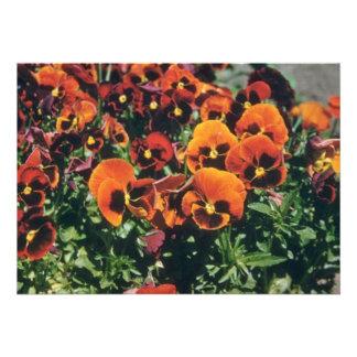 Orange Pansy (Viola) flowers Invitations