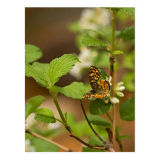 Orange Patterned Butterfly Post Cards