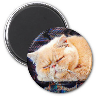 Orange Persian Cat Refrigerator Magnets