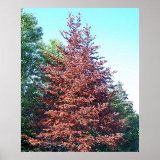 Orange Pine Tree Poster