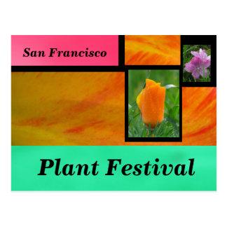 Orange Plant Festival Postcard