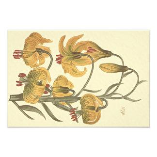 Orange Pompone Lily Botanical Illustration Photo Print