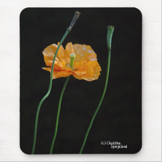 Orange Poppy Flower Mousepad