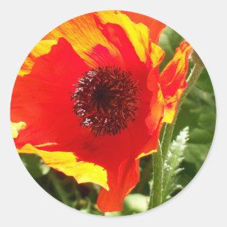 Orange Poppy Stickers