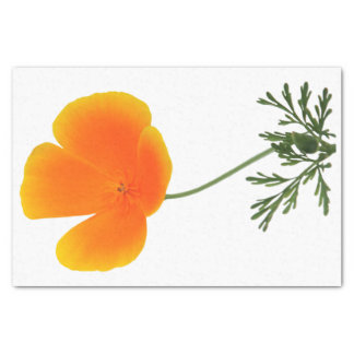 orange poppy tissue paper