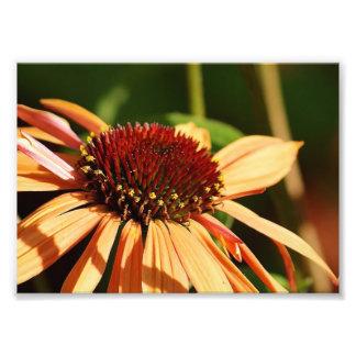 Orange Power Punch ! 7 x 5 Photographic Print