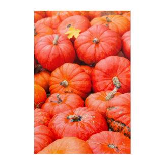 Orange pumpkins at market, Germany Acrylic Print