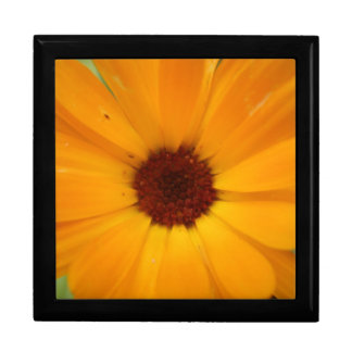Orange Rain Daisy Gift Box