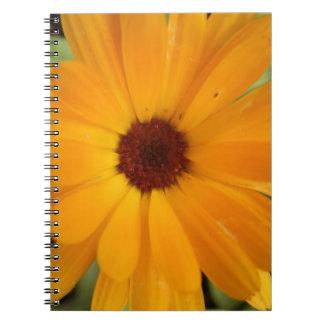 Orange Rain Daisy Notebook