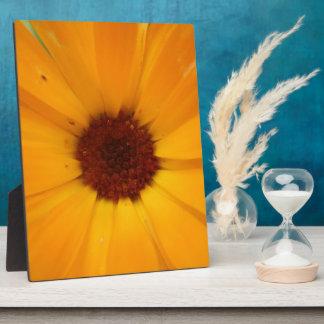 Orange Rain Daisy Plaque