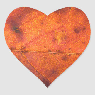 Orange-Red Autumn Leaf Photo Stickers