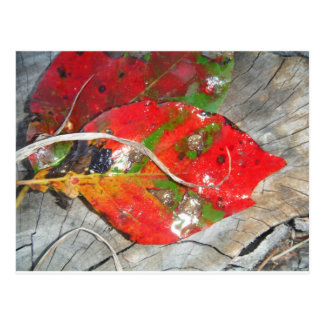 Orange, Red, Green,Yellow fall leaf Post Cards