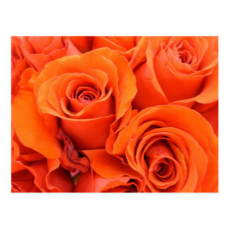 Orange Red Roses Flowers Bouquet Bright Rose Petal Postcard