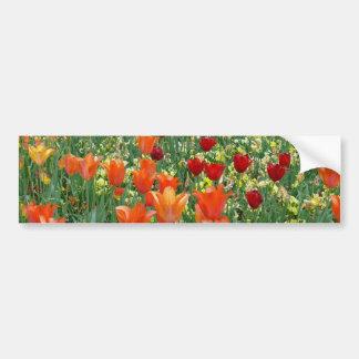 Orange & Red Tulips Bumper Sticker