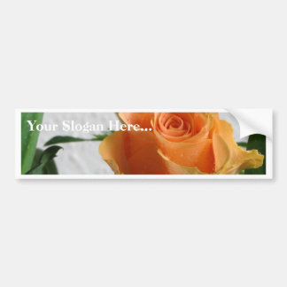 Orange Rose Against The White Wall Car Bumper Sticker