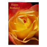 Orange Rose Birthday Card
