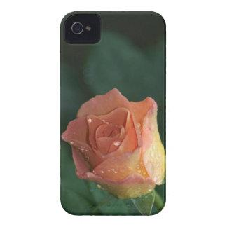 Orange Rose Case-Mate iPhone 4 Case